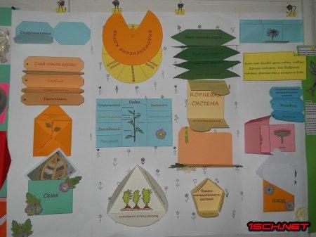 Підсумки гуртка «Екологічне землеробство» в СЗОШ№1 - 2018